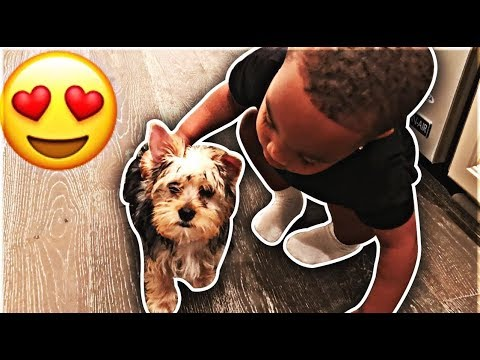 SURPRISING DJ WITH A NEW PUPPY | THE PRINCE FAMILY