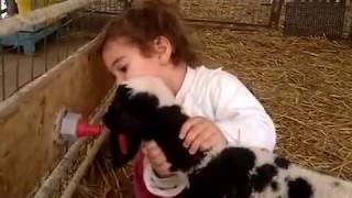 יערה שלי כשהיתה בת שנתיים וחצי. מכריחה את הטלאים בדיר לשתות חלב מהמיינקת. thumbnail
