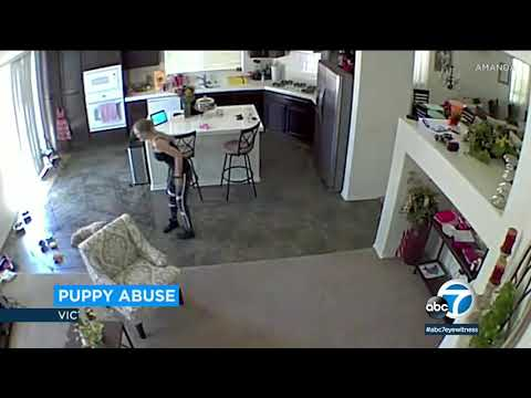 Video shows pet sitter throw puppy on floor at Victorville home