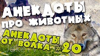 Анекдоты про животных. Анекдоты от Волка #20
