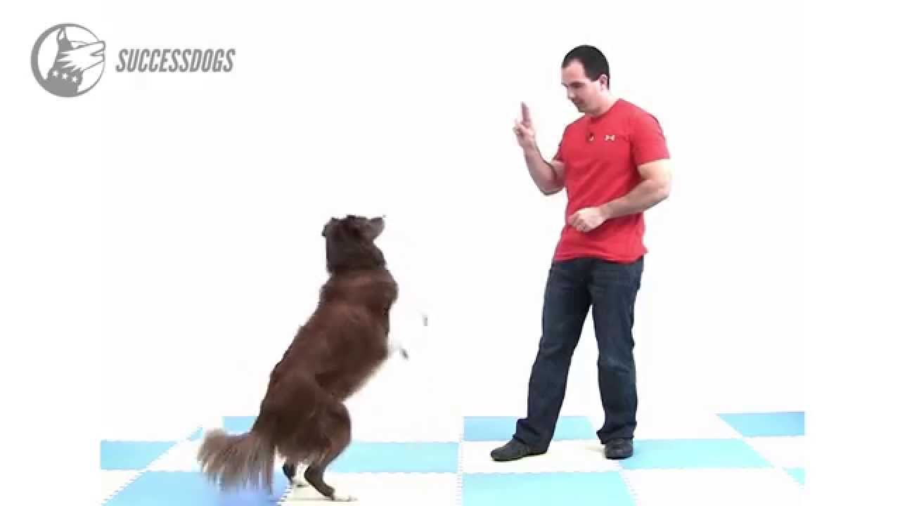 How To Train Your Dog To Stand On Hind Legs