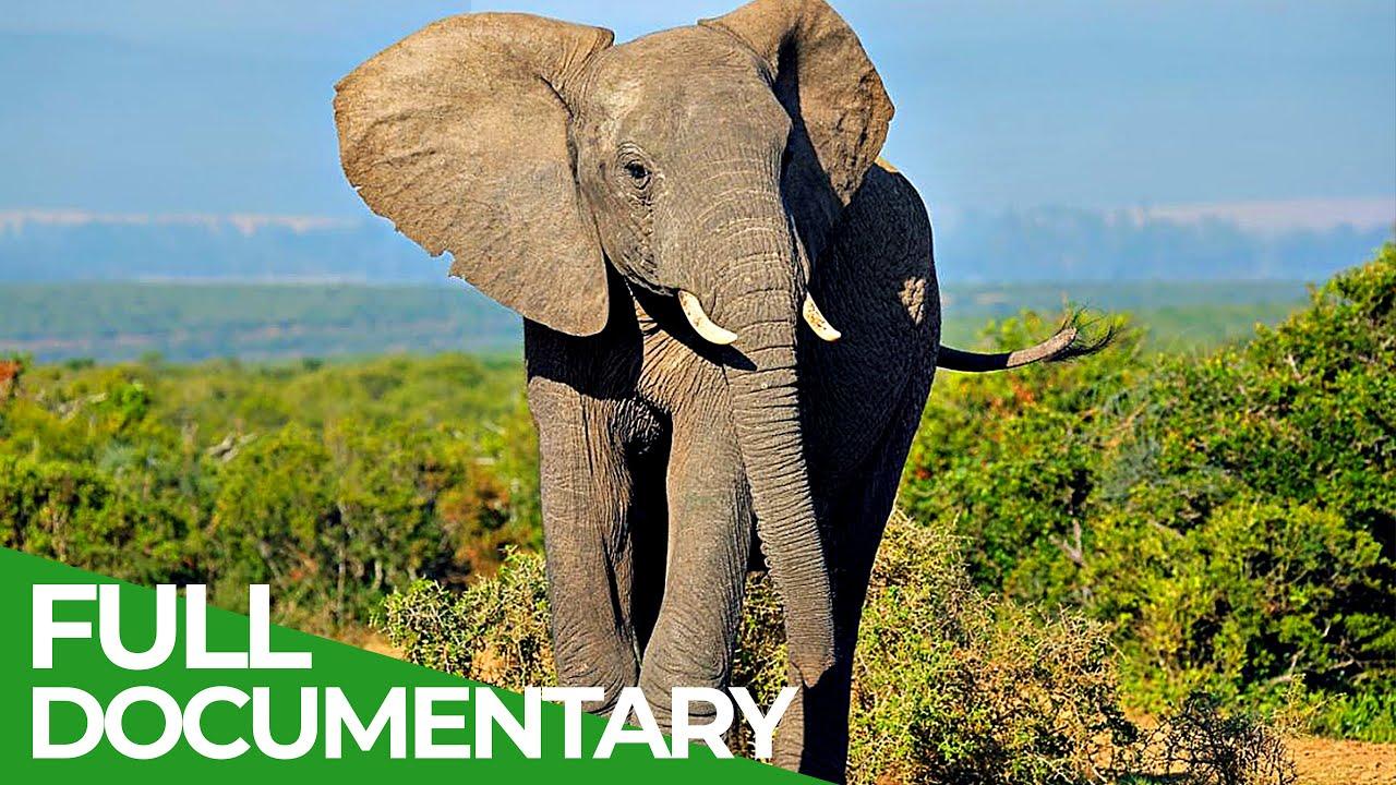 Wildlife Africa & Asia: Elephants | Free Documentary Nature
