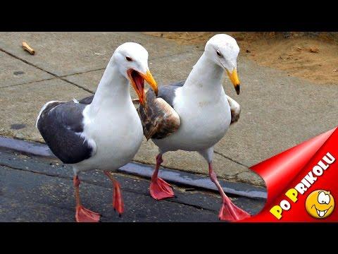 Видео про птиц смотреть смешное