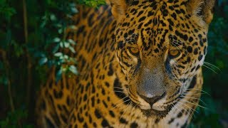 Deforestation is pushing the Amazon rainforest to an irreversible tipping point