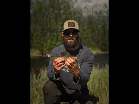 Fishing Alaska: Grayling Of Tangle Creek