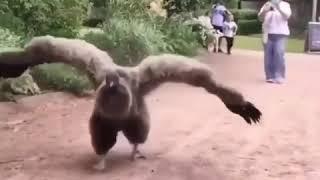 Андский кондор