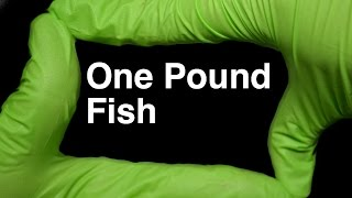 £1 One Pound Fish Muhammad Shahid Nazir by Runforthecube No Autotune Cover Song Parody Lyrics