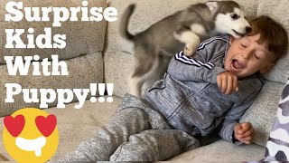 Kids Return From Holiday To A New Husky Puppy!! [BEST REACTION EVER!] [PUPPY ATTACK!!]