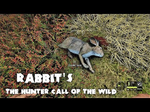 theHunter Call of the wild More Rabbits