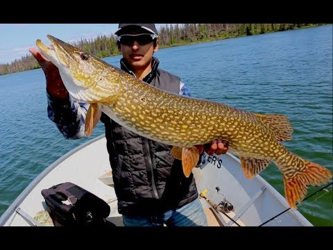 Gangler's Rockin' Trophy PIKE at North Seal River Lodge