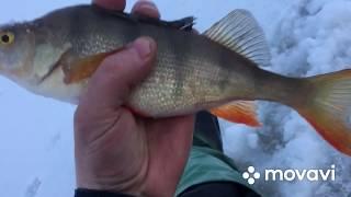 Подлёдная рыбалка последняя поездка закрываю сезон отличным клёвом