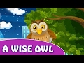 New Version   A Wise Owl   Cartoon Animation Rhymes   Nursery Rhymes for Children 2016