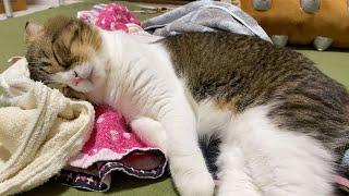洗濯物にうっとりしちゃうパパ猫が可愛すぎるw