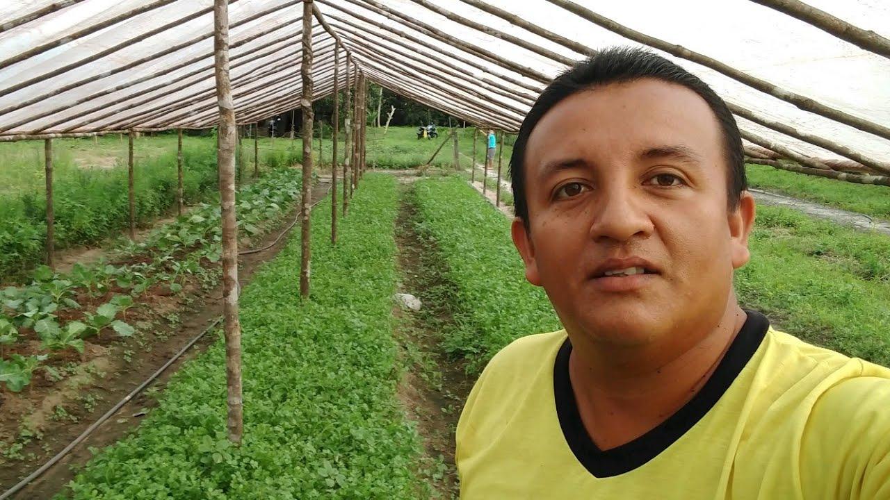 Trabalhar com hortaliças dá lucro? Minha opinião 😉
