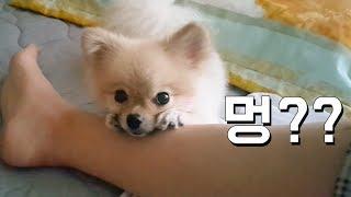 귀...귀여워... 꽃받침하는 강아지 호두