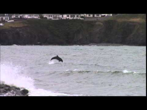 Stormy Saturday in Borth with Dolphins (August 2014)