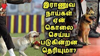 ஓய்வு பெறும் இந்திய இராணுவ நாய்கள் கொலை செய்யப்படுவது ஏன்? | Indian Army Dogs | kudamilagai