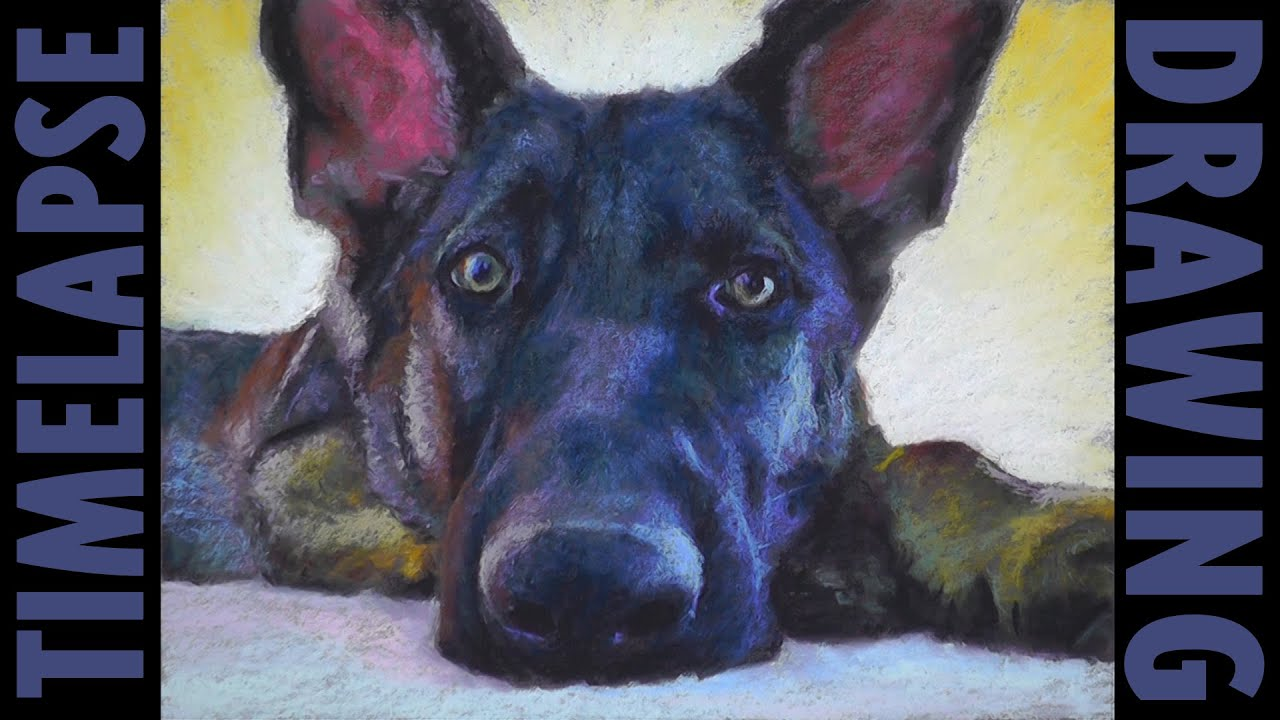German Shepherd Dog Pastel Painting Timelapse