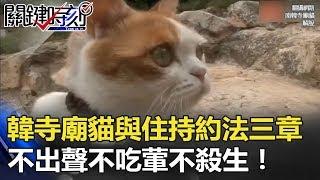 超可愛! 韓國寺廟貓與住持約法三章「不出聲、不吃葷、不殺生」!? 關鍵時刻 20180321-3 朱學恒