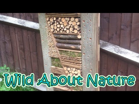 Insect hotels, how successful were they?