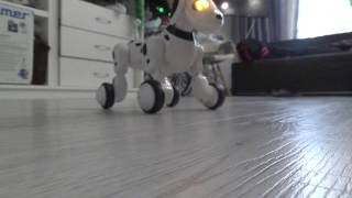 Собака Робот Чип