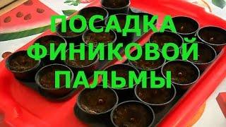видео VLOG : Финиковая Пальма, Наш новый натяжной потолок !!!