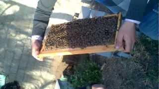فحص   خلية النحل للمبتدئين