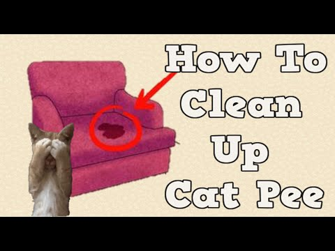 Getting Rid Of Cat Pee Smell How To Clean Cat Urine Removing Cat