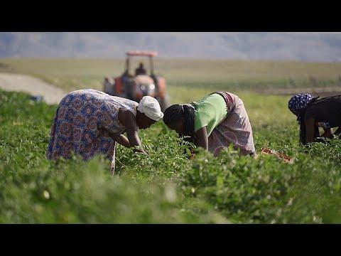 L'Angola punta sull'agricoltura e sull'export di frutta