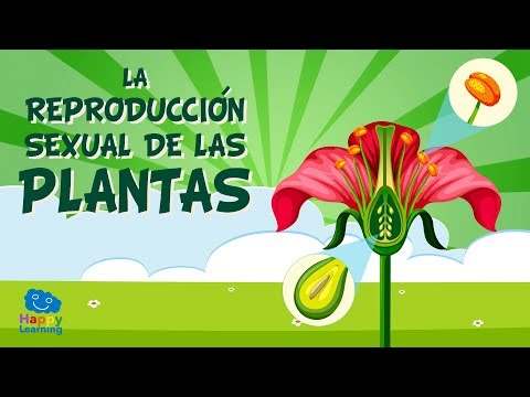 Imagenes de plantas reproducidas asexual propagation