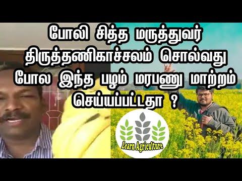 மோரிஸ் பழம் மரபணு மாற்றம் செய்யப்பட்டதா ? Morris banana is GMO banana ? | Learnagriculture