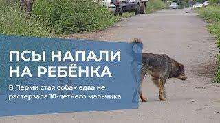 В Перми стая собак едва не растерзала 10-летнего мальчика