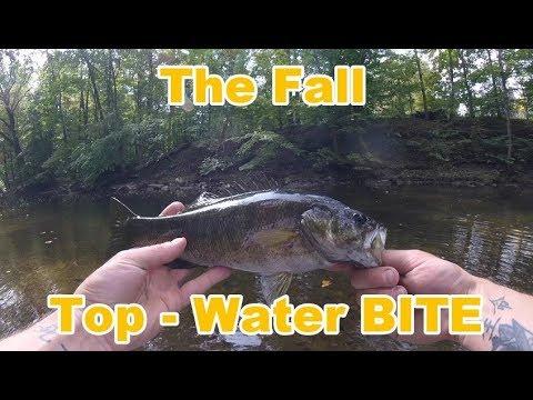 Top - Water FISHING In The FALL!