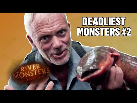 Deadliest Monsters #2 | COMPILATION | River Monsters