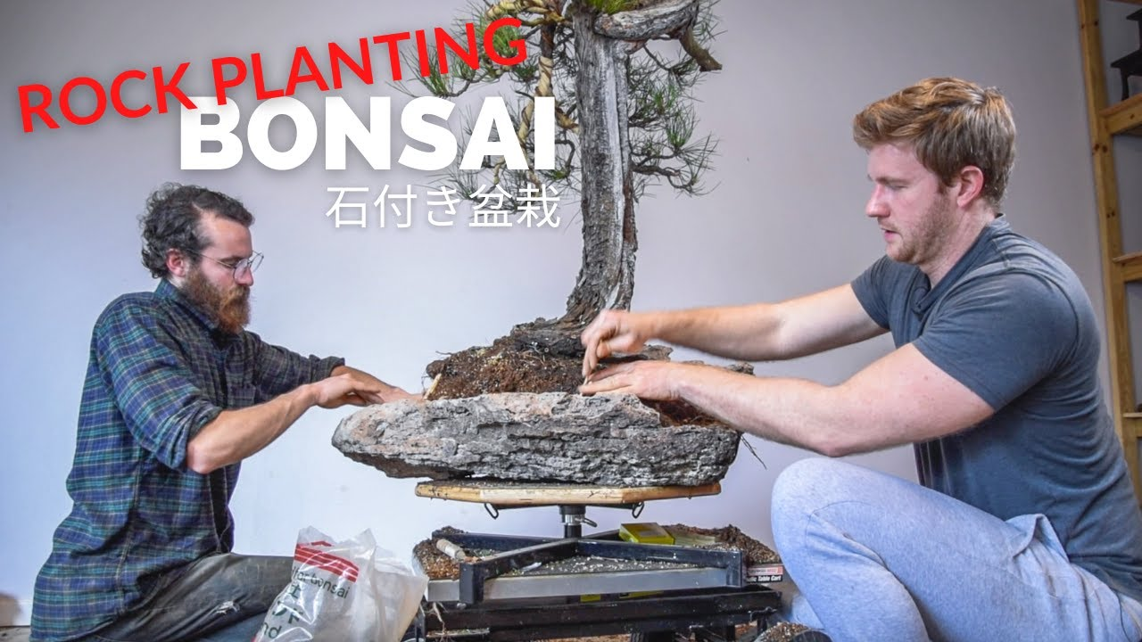 Download Epic Pine Bonsai Rock Planting | In the Workshop, Ep. 9