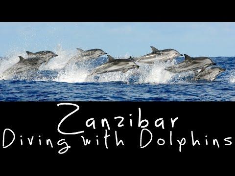 Diving with Dolphins in Zanzibar - Tanzania
