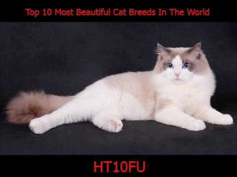 Top 10 Most Beautiful Cat Breeds In The World 2017