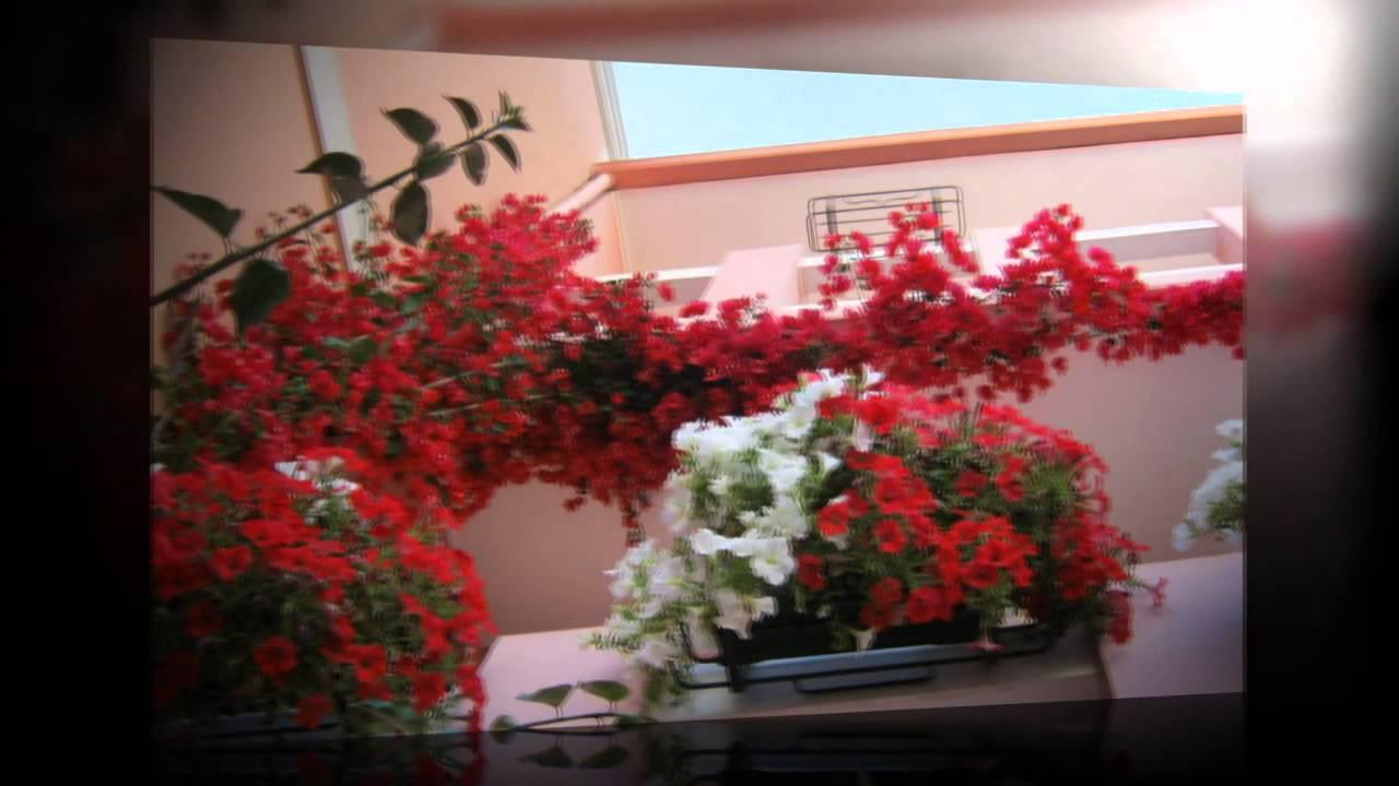 Spettacolare fioritura di bouganville e surfinie youtube for Bouganville fioritura
