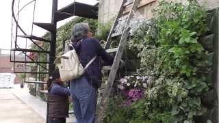 taller jardin vertical 3 de mayo 2014