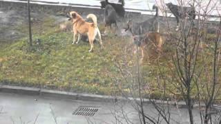 групповуха по   собачьи