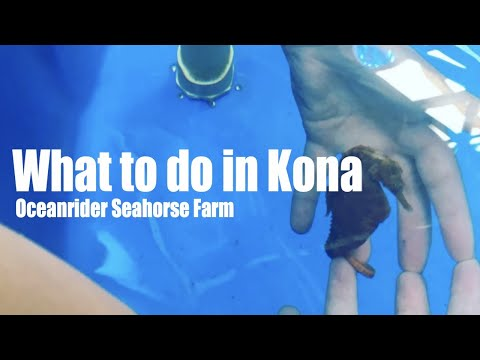 Best Things To Do In Kailua Kona Town | NCL Cruise Port Terminal | We Visit OceanRider Seahorse Farm
