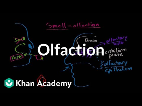 Olfaction - Structure & Function