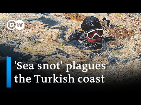 'Sea snot' in Turkey is part of a growing environmental threat | DW News