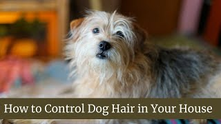 How to Control Dog Hair in Your House Updated 2021 || Dog hair cutting