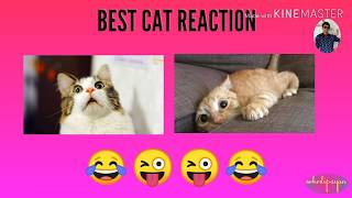 Funny Cats and Kittens Meowing Compilation with patting sound