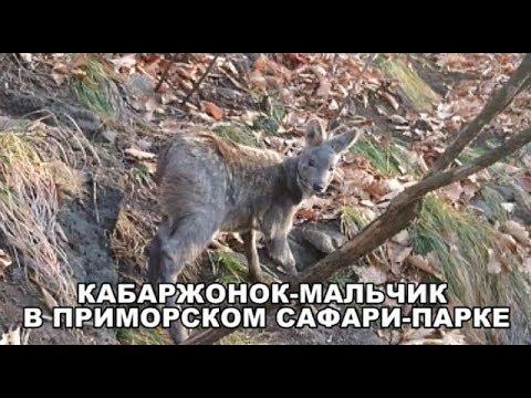 КАБАРЖОНОК МАЛЬЧИК В ПРИМОРСКОМ САФАРИ-ПАРКЕ
