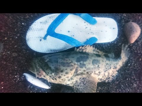 Ultralight Fishing: Kerapu Sandal Jepit.