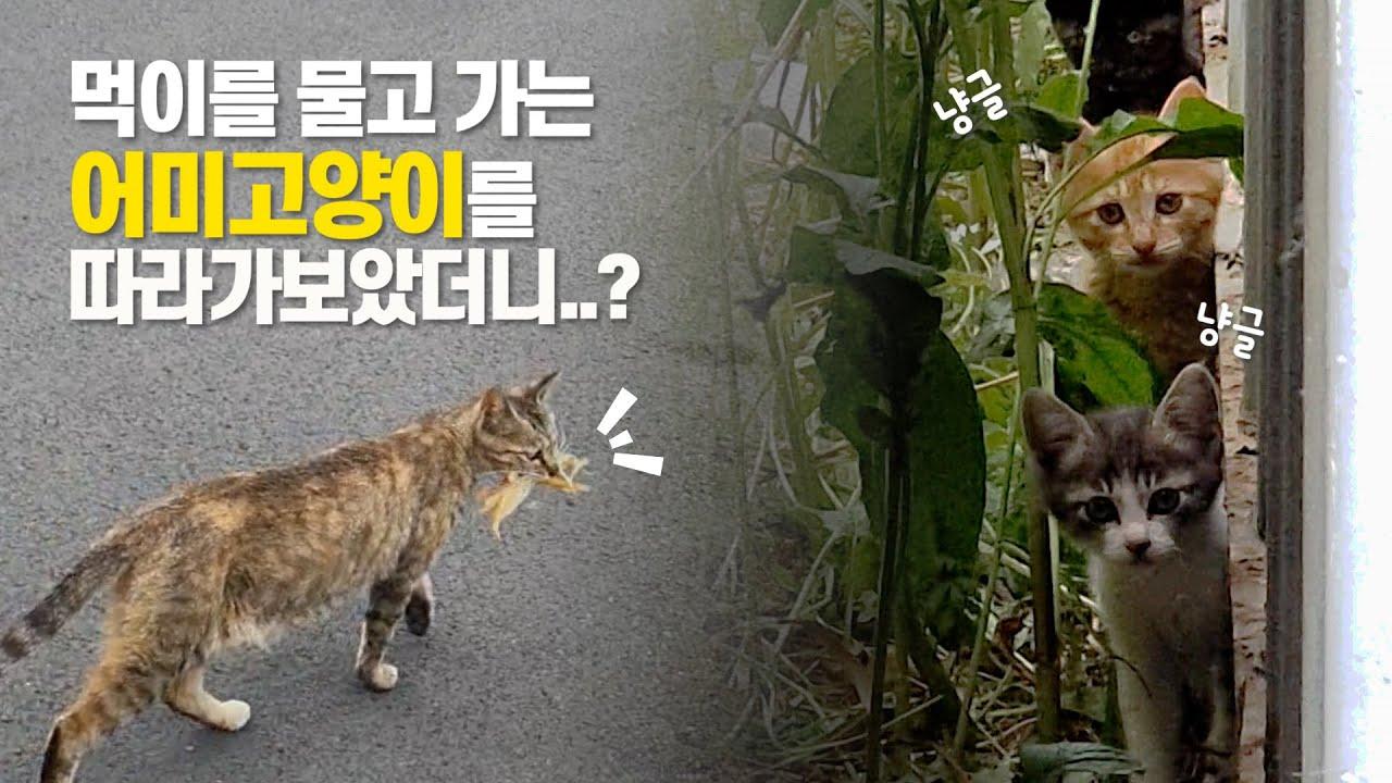 모성애의 위대함 | 몇번이고 먹이를 물어다 주는 어미고양이 | 이 영상은 심장에 해롭습니다.