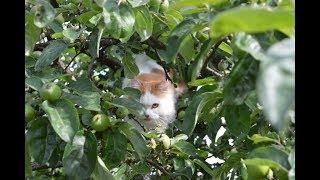 Как кошка реагирует на видео с ежиком на звук