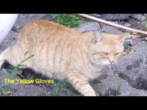 How To Keep Cats Out Of The Garden- Simple Idea